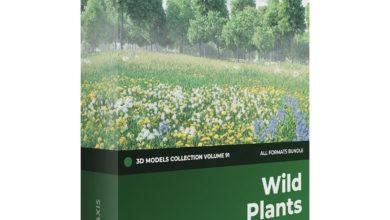Photo of Cgaxis Models Volume.091 Wild Plants