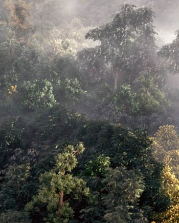 Building a Realistic Aerial Forest Scene in 3ds Max free download Pluralsight