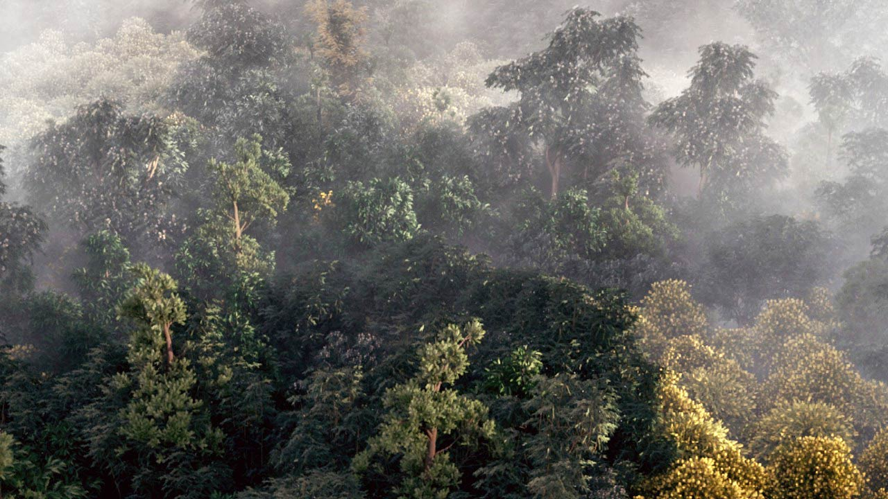 Building a Realistic Aerial Forest Scene in 3ds Max free download