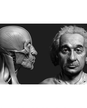 Udemy – Zbrush Facial Anatomy and Likeness Character Sculpting free download