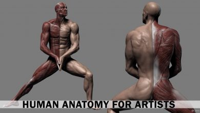 Udemy – Human Anatomy for Artists using Zbrush and Photoshop free download