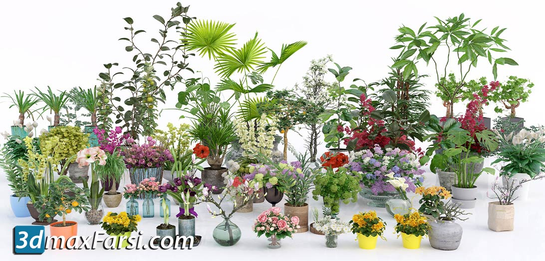 Evermotion – Archmodels Vol 173 indoor plants & flowers download
