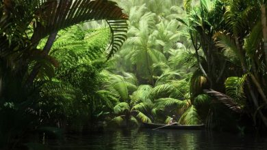 Evermotion – Archmodels vol. 085 : tropical trees free download