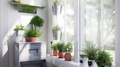 Evermotion – Archmodels Vol. 141 : indoor plants free download