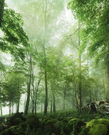 Evermotion – Archmodels Vol. 154 : plants trees free download