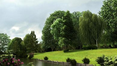 Evermotion – Archmodels vol. 58 : very realistic trees free download
