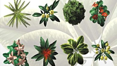 Dosch Viz-Images: Bird's Eye Plants