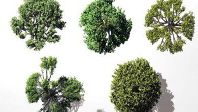Dosch VizImages: Bird's Eye Trees