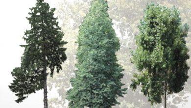 Dosch Viz Images: Forest Trees