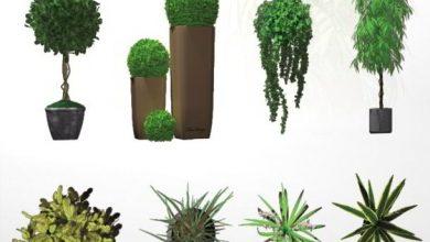 Dosch Viz-Images: Indoor Plants