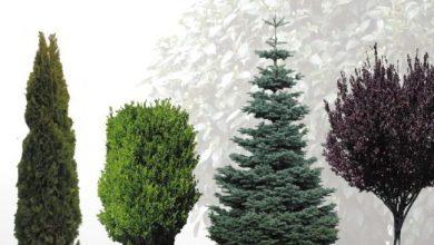 Dosch Viz Images: Shrubs & Trees