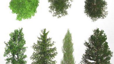 Dosch Viz-Images: Tree Library