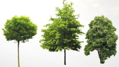 Dosch Viz-Images: Trees Extended
