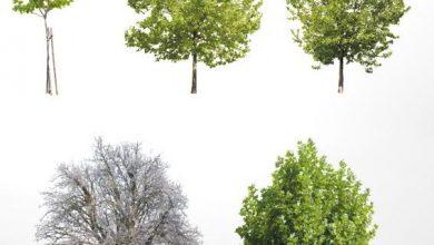 Dosch Viz-Images: Trees V3