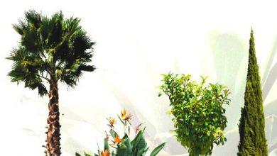 Dosch Viz Images: Tropical Plants & Trees