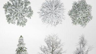 Dosch Viz-Images: Winter Trees