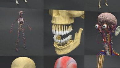 Dosch 3D: Human Anatomy