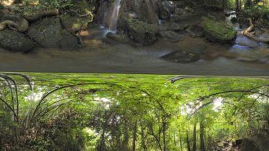 Dosch HDRI: Primeval Forest