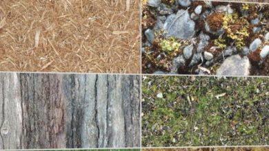 Dosch Textures: Plants & Nature V2