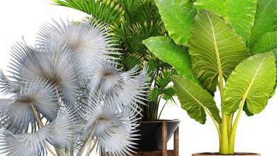 TurboSquid – 3D Collection of tropical plants free download