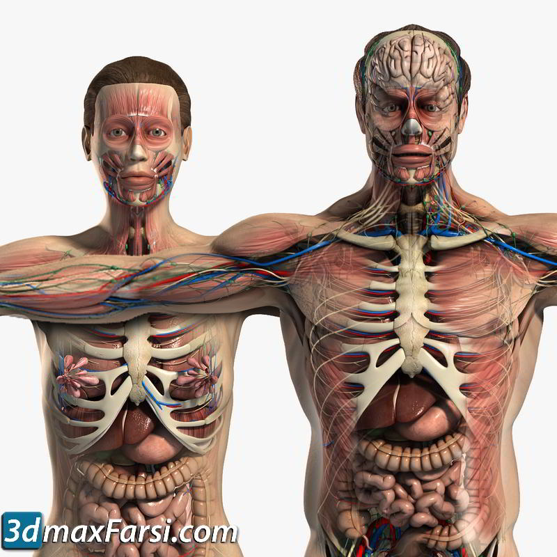 TurboSquid – Male and Female Anatomy Full Pack V05 free download