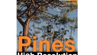 TurboSquid – Pines High Resolution Textures free download