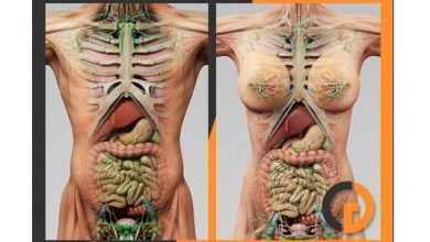 TurboSquid – 3D Human Male and Female Complete Anatomy free download