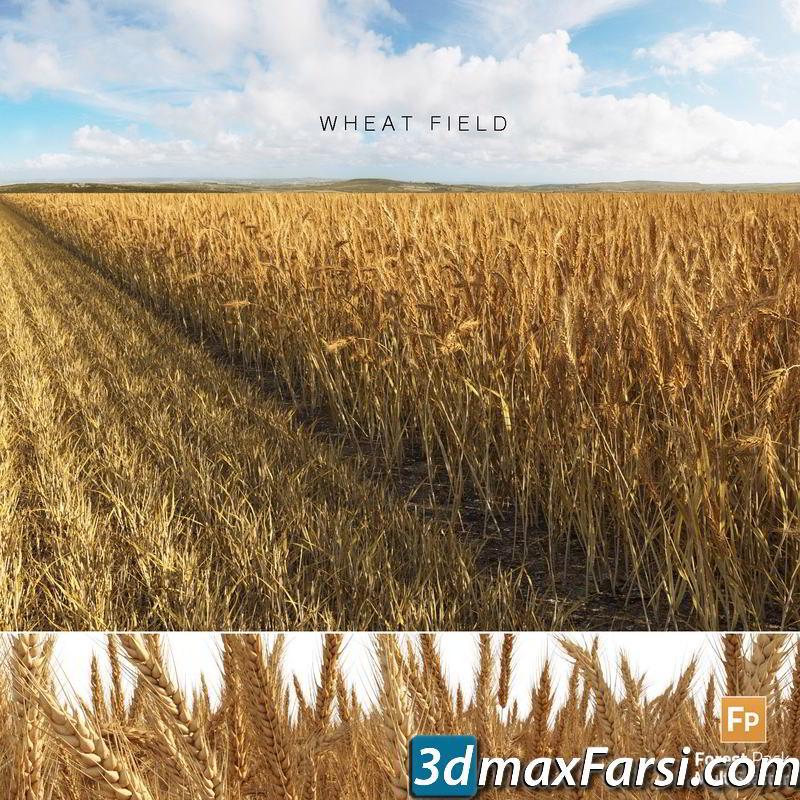 TurboSquid – Wheat Field (Triticum) 3D model