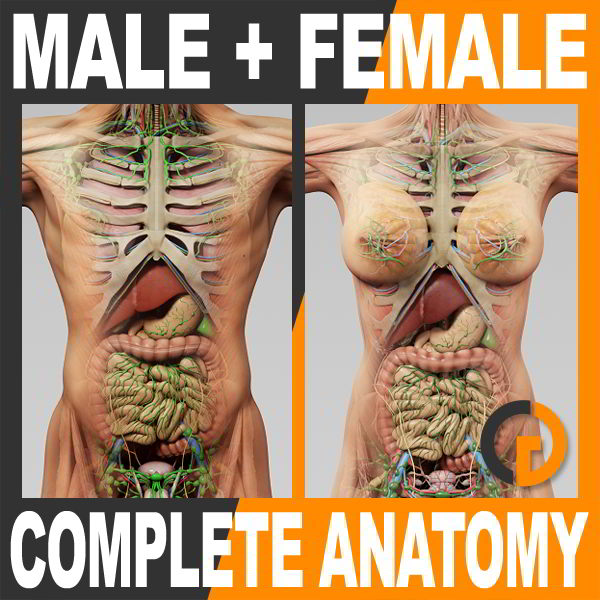 TurboSquid Human Male and Female Complete Anatomy For C4D free download